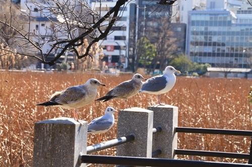 aa上野05.jpg